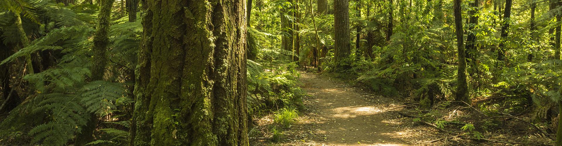 Red Sequoia web design